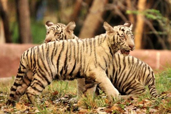 Nehru Zoo in Hyderabad