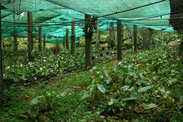 Tropical Spice Plantation