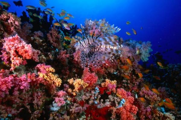 HP Reef